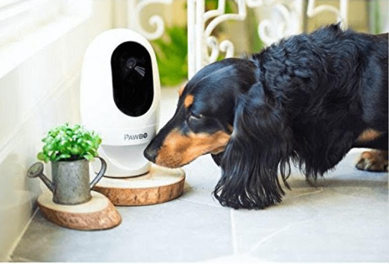 Un chien face à son appareil Acer