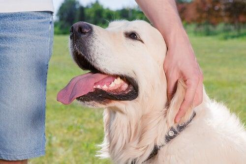 un chien est proche de son maître, l'air heureux avec sa main sur sa tête