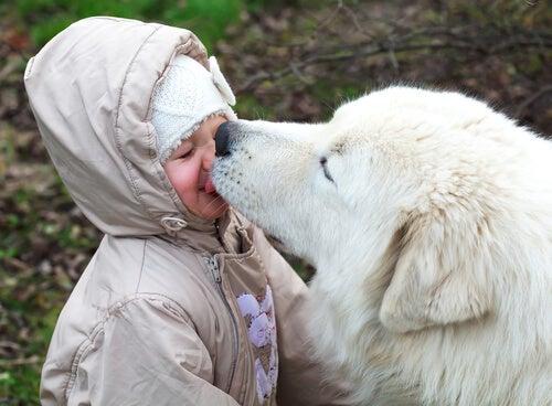 Un chien lèche le visage d'un enfant