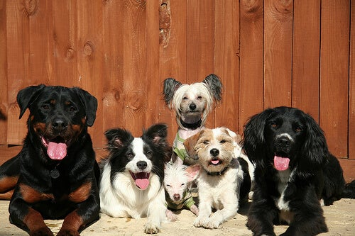 groupe de cinq chiens