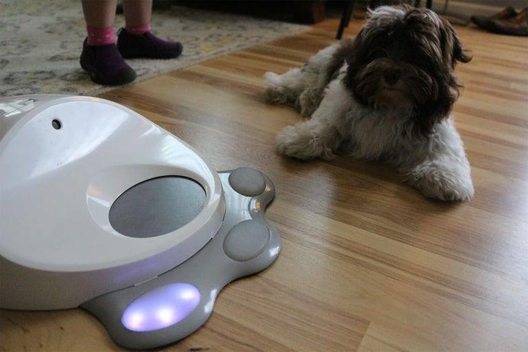 chien qui joue avec une console de jeux