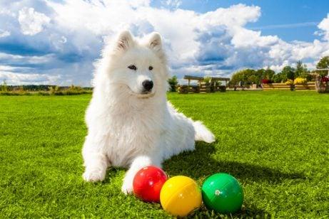 Jouets interactifs pour chiens