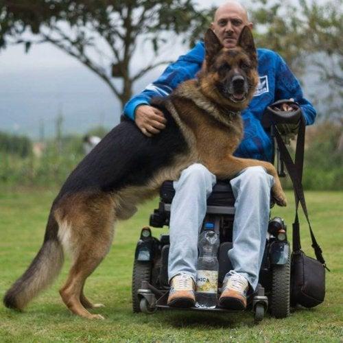 L'amour infini d'un chien pour son maitre hospitalisé