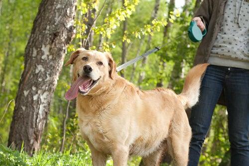 Un chien tenu en laisse par son maître est dans une forêt