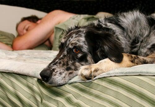 Un chien est allongé sur un lit avec une femme qui dort derrière lui