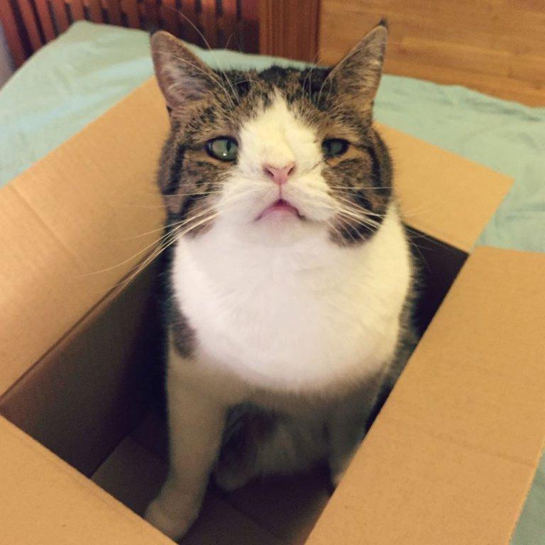 Le chat Monty est dans un carton