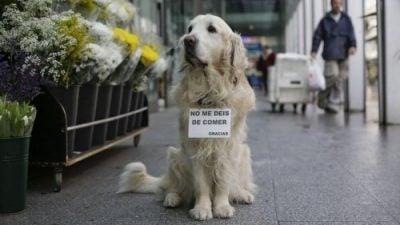 Ney, un chien dont nous nous souvenons tous