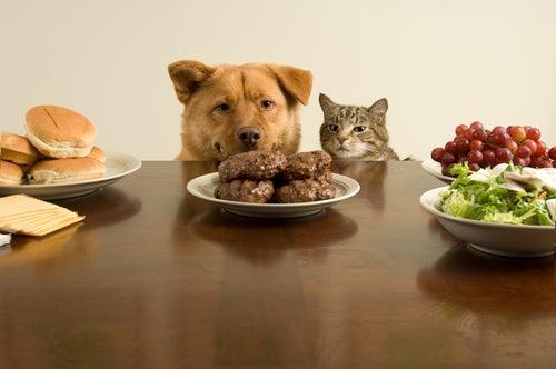 un chien et un chat qui reniflent de la viande à table