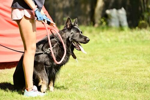 Un chien en laisse à côté d'une jeune femme