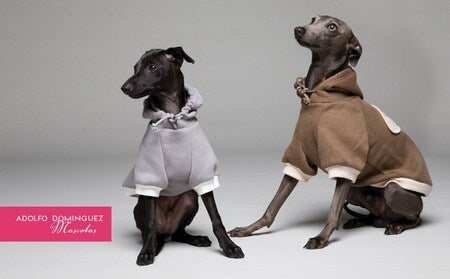 deux chiens avec des vêtements