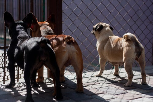 Taïwan interdit la viande de chien et de chat