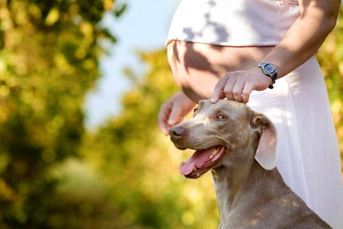 femme enceinte caressant son chien
