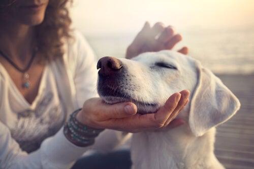 une femme caresse un chien