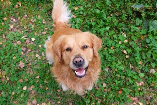Comment les chiens s'expriment-ils ?