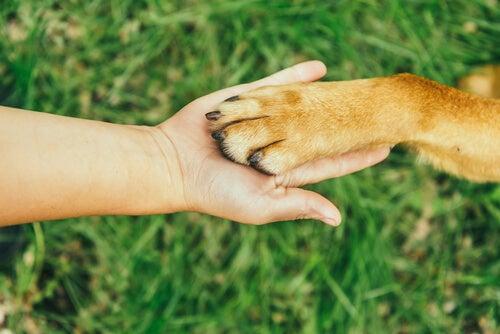la patte d'un chien dans la main d'une personne