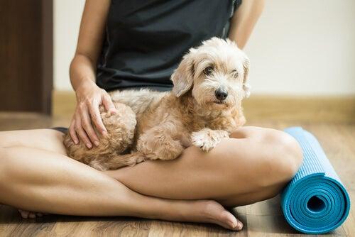 UN jeune chien sur les genoux de sa maîtresse, assise à côté d'un tapis de yoga