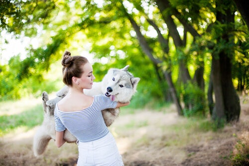 Un husky est dans les bras d'une jeune femme