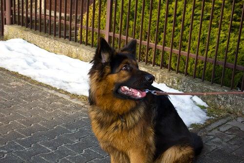 chien assis sur le trottoir