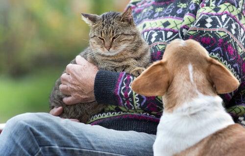 un chien jaloux d'un chat dans les bras d'une femme