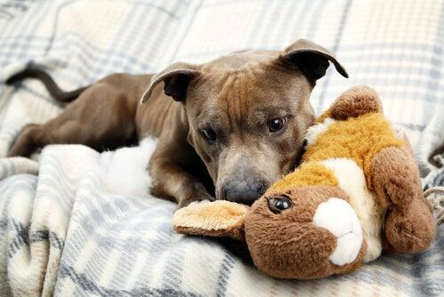 un jeune chien joue avec une peluche