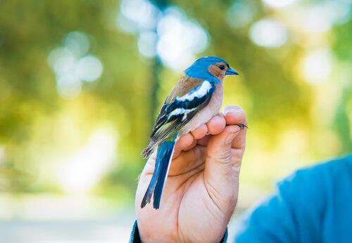 un oiseau posé sur la main d'une personne