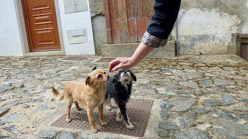6 conseils pour gagner la confiance de votre chien
