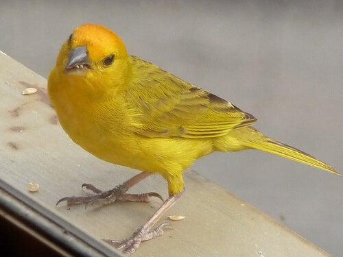 Comment connaître le sexe d'un oiseau?
