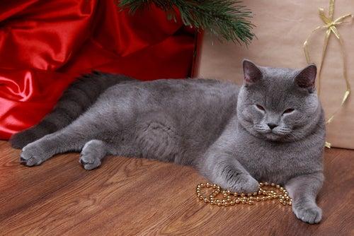 un chat bleu russe allongé sous un sapin de Noël
