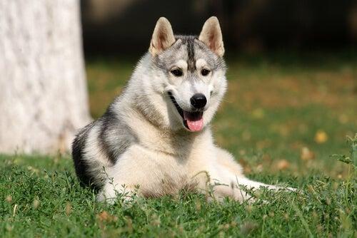 Les chiens ont-ils une intelligence émotionnelle ?