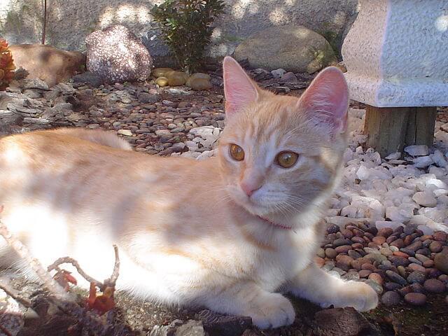 Maladies virales chez les chats