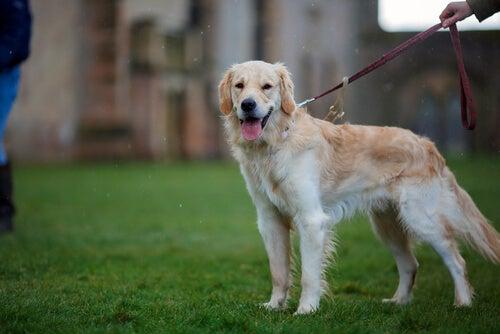 5 erreurs courantes quand on promène son chien