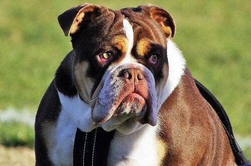 Avoir un chien: combien ça coûte ?