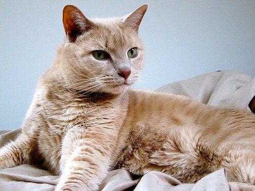 Pourquoi stériliser votre chat ?