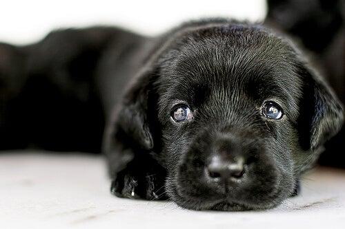 L'adoption d'un chien : tout ce que vous devez savoir !
