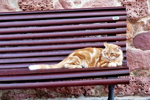 Comment pouvez-vous aider les chats de la rue ?