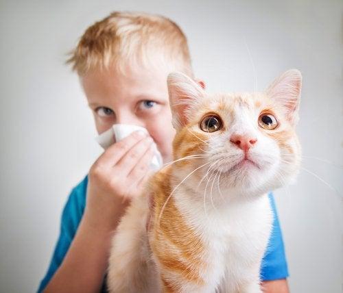 Un enfant cache son visage dans un mouchoir en tenant un chat
