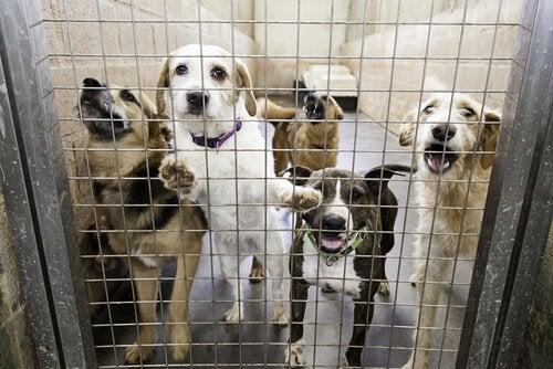 un groupe de chiens derrière une grille