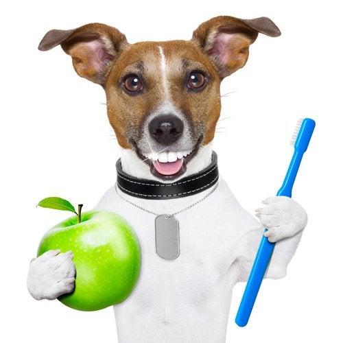 une illustration d'un chien qui tient une pomme et une brosse à dents