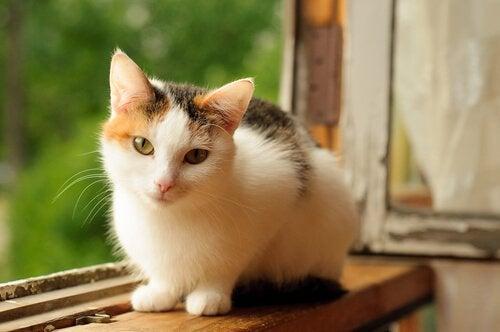 un chat calico sur une fenêtre