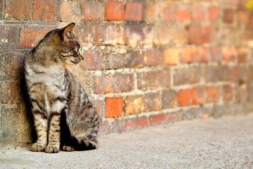 un jeune chat contre un mur en brique