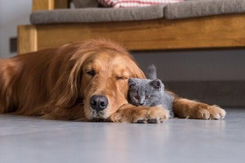 chien et chat qui dorment l'un contre l'autre