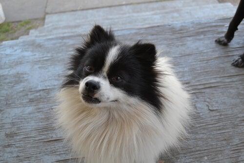Mémoire : votre chien se rappelle de tout ce que vous faites... attention !