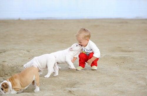 un bébé joue avec un chien