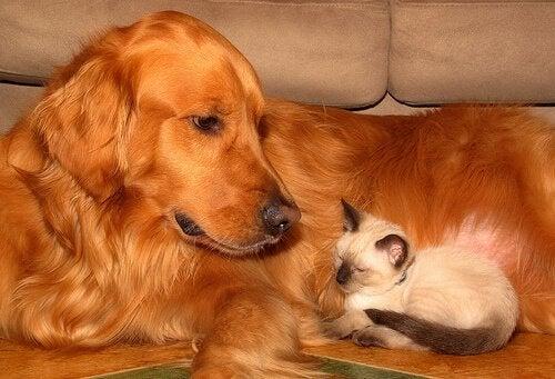 Prendre soin du bien-être de votre animal de compagnie