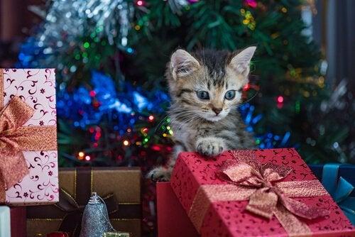 un chaton escalade les cadeaux entreposés devant le sapin de Noël