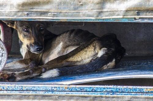 chien victime d'une catastrophe naturelle