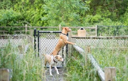 Un chien regarde par dessus la clôture et cherche à s'échapper