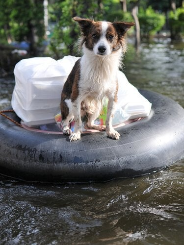 chien sur une bouée de sauvetage