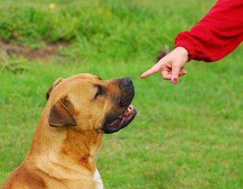 une femme pointe son doigt vers un chien