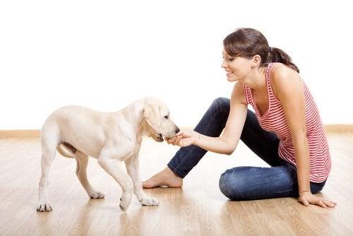 une femme joue avec un jeune labrador